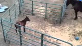truckle feature miss aka missy loves to run she is 4 days old in this video