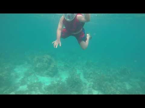 Bohol 2017 05-04@0815 Loon Basdacu Deep Sea Geleo Style