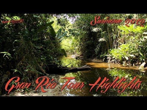 Aquatic Discoveries: Suriname 2012