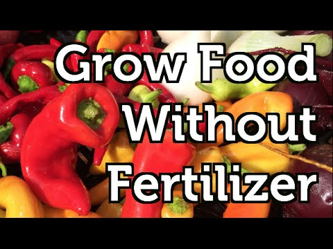 Grow Crops In Containers with NO Fertilizer