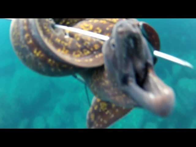 Pesca submarina morena de 3 Kg en Palma de Mallorca GoPro HD Hero 2