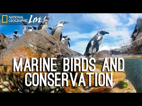 Photographing our Seas: Marine Birds and Conservation | Nat Geo Live