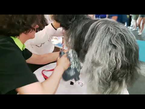 Brushing a very long coat with the Auto Dog Brush