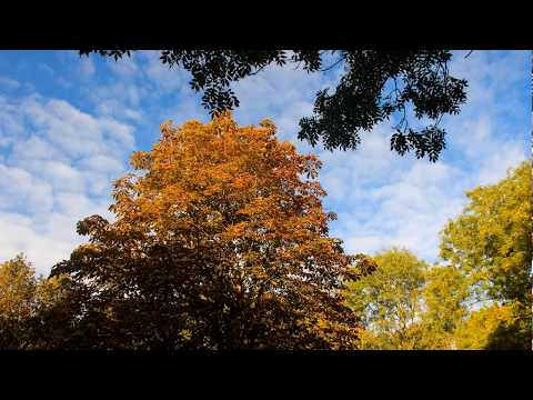 Amsterdam Park In Autumn ♫🎧☺HD - Beautyful Trees