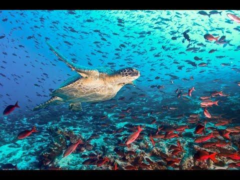 APRU Pacific Oceans