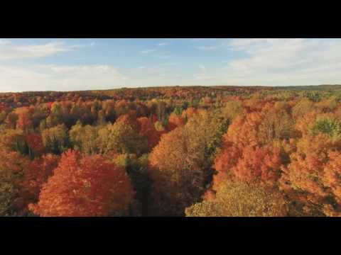 1000 Acres in Northern Michigan: 6 Houses, 7 Lakes and 10 Hunting Blinds