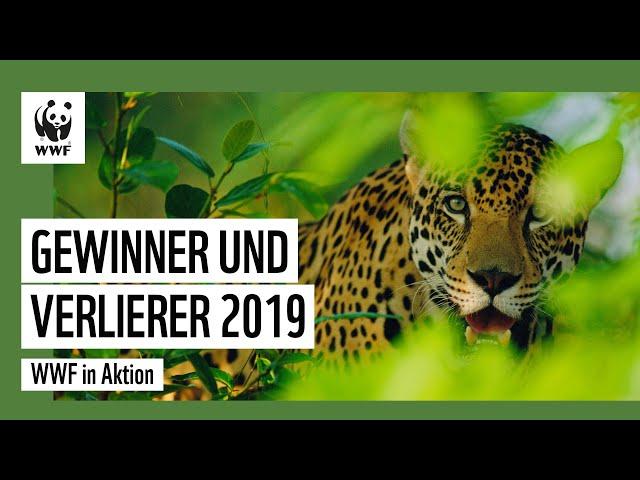 Gewinner und Verlierer 2019