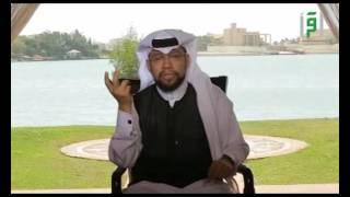بيت على الموج   -الحلقة 2   - جدي أسك -  الدكتور محمد القايدي