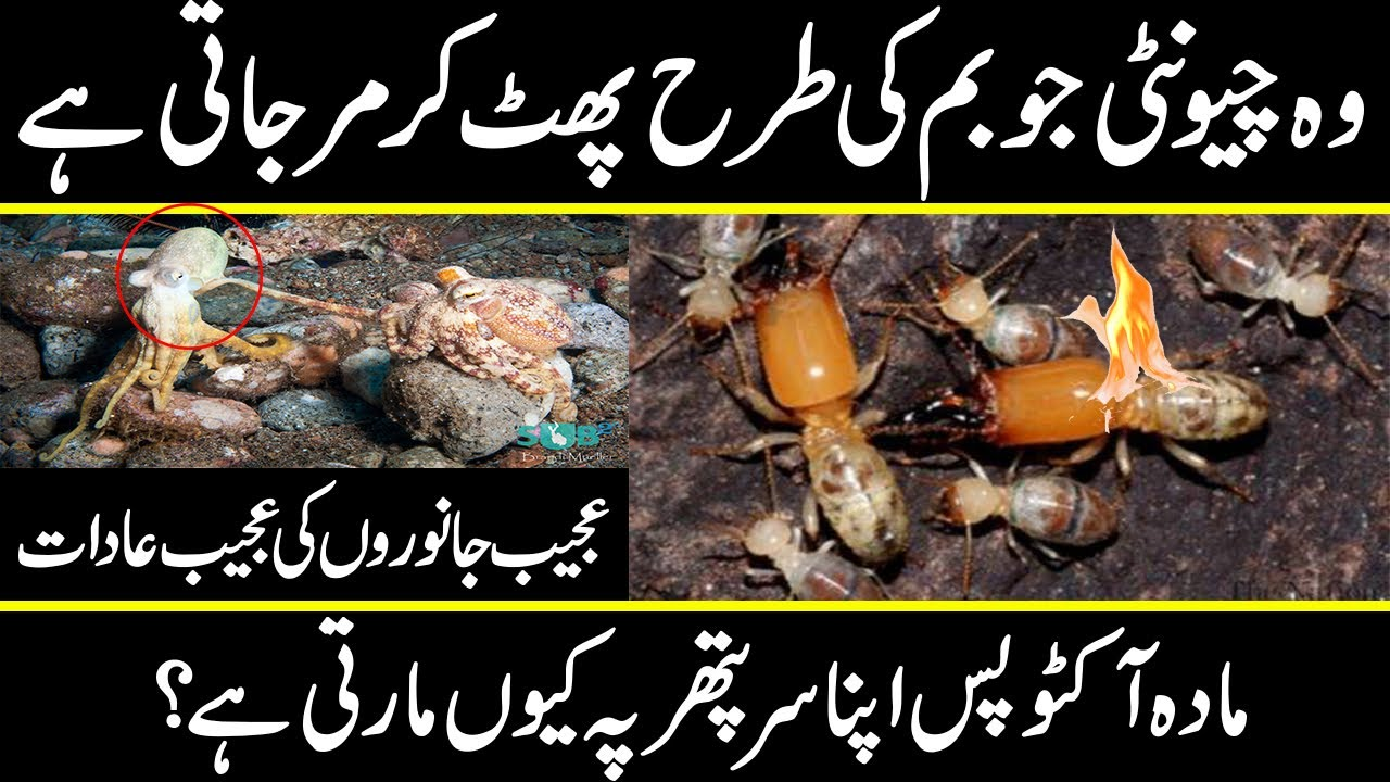 amazing facts about animals and their habits which will surprise you | urdu cover documentaries