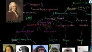 Online Tutorial On Taxonomy and the tree of life- Biology