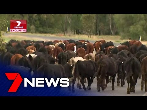 Rain Relief Has Finally Arrived For A Drought-stricken Community In Coonamble   7NEWS
