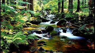 Das geheime Leben der Bäume – Peter Wohlleben