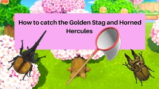 Animal Crossing New Leaf how to catch the Golden Stag - works for the Horned Hercules too