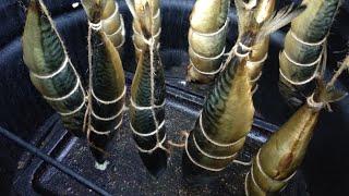 Рыба Скумбрия горячего копчения! Пошаговый рецепт + секрет и нюансы!