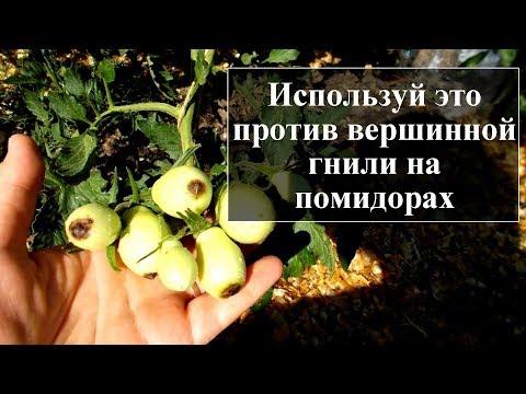 Как бороться с вершинной гнилью на помидорах | помидорах | вершинная | томатов | лечение | борьбы | гниль | меры | на