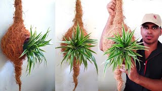 Hand Made Engineer Bird Nest Planter | Baya weaver Nest Planter | DIY Planter Idea