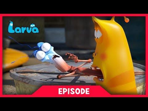LARVA - STICK INSECT   Cartoon Movie   Cartoons For Children   Larva Cartoon   LARVA Official
