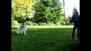 Zasha Frisbee 3!