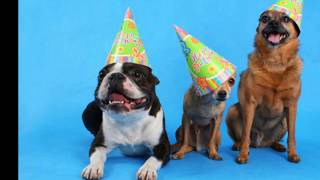 Happy Birthday To You Dogs Video