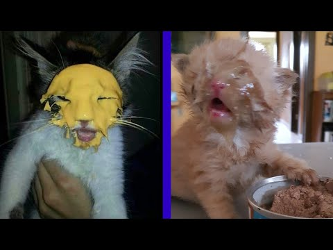 BEST CAT MEMES COMPILATION OF 2020 PART 17 (FUNNY CATS)