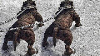 Top 7 Perros Que le Ganan al Rottweiler