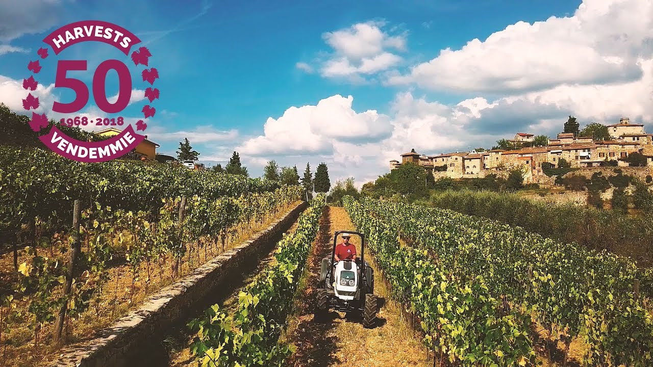 Montefioralle Winery your Wine Tasting in Tuscany | Wine tour in Chianti