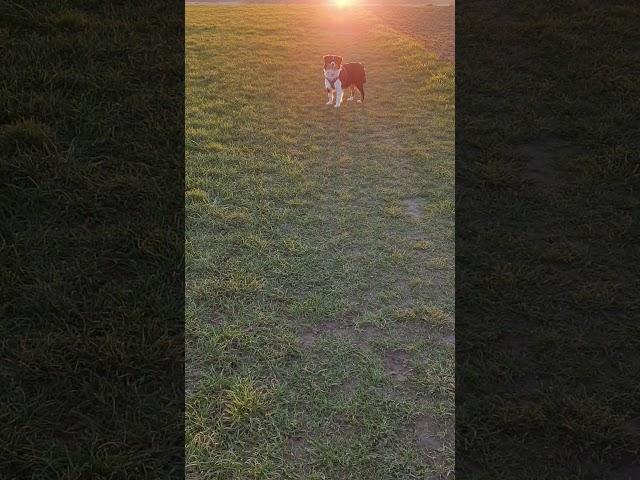 tamina im Sonnenuntergang