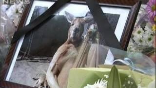サンドバッグで遊ぶ姿で人気を集めたカンガルーのハッチが先月、天国に...