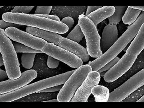 Final Documentary Germ Theory Youtube
