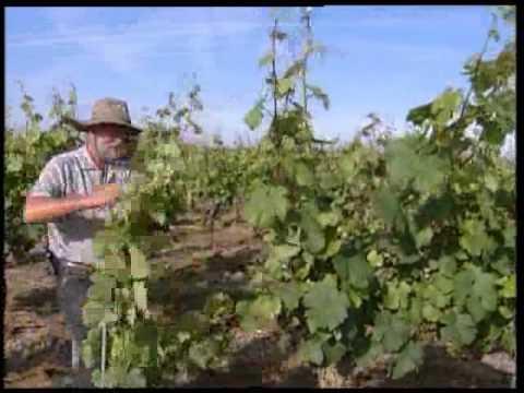 Vidéo de viticulteur/trice