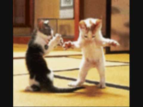 Animated Dancing Animals - Music - Oops Upside Your Head ...