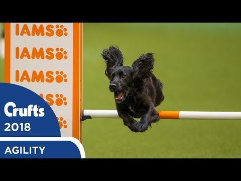 Agility - Crufts Large Novice & Medium ABC Final (Agility) Part 2 | Crufts 2018