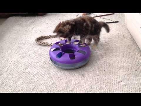 Kitten plays Ball