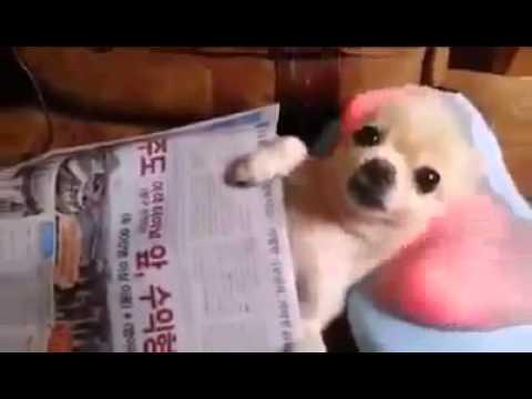Собака на массажере сексуальное нижнее белье для девочек