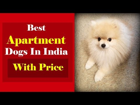 Top 10 Best Dog Breeds In India With Price In India Rupee Action
