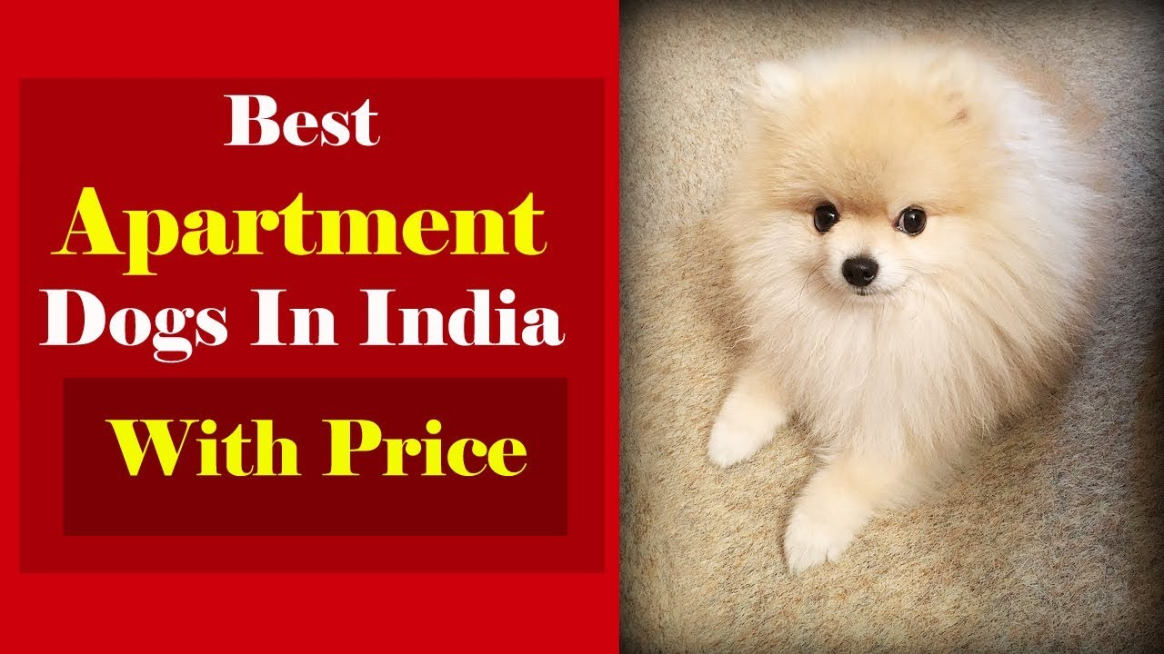 List Of Best Dogs For Apartments