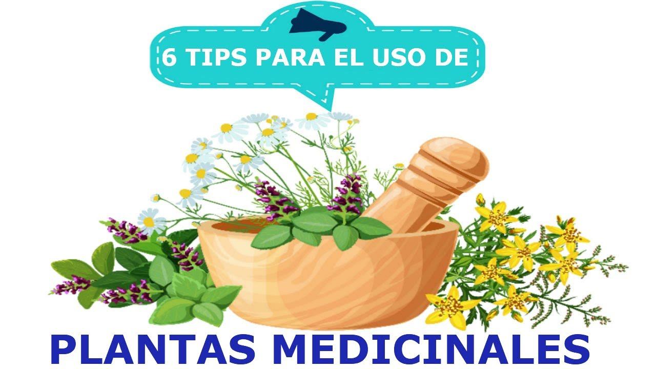 6 Consejos útiles para usar correctamente plantas medicinales