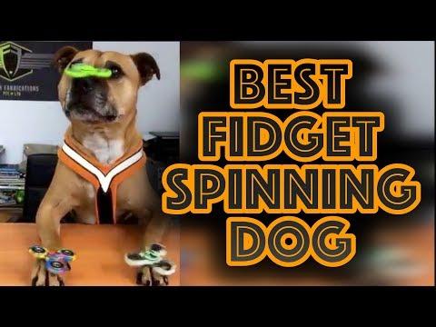 BEST Funny Fidget Spinner Dog Trick Spinning Toy Craze vs Dog