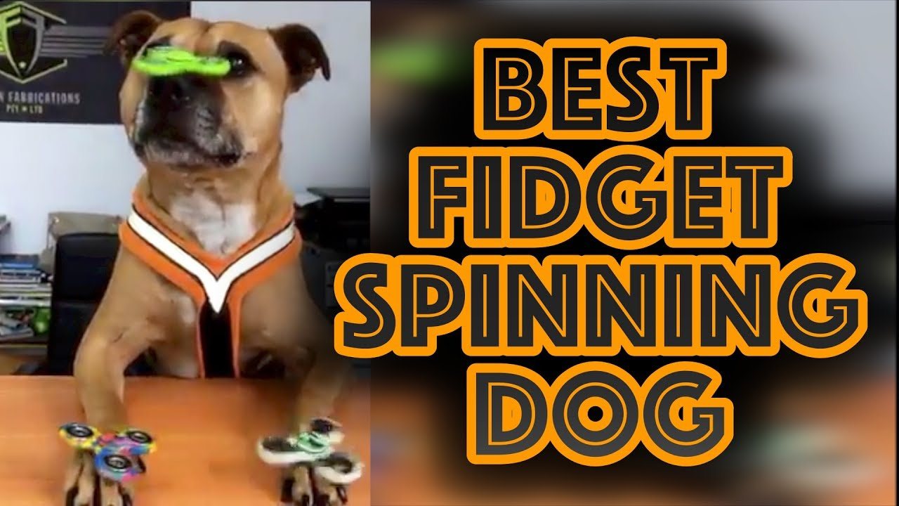 Image result for image fidget spinner on dogs nose