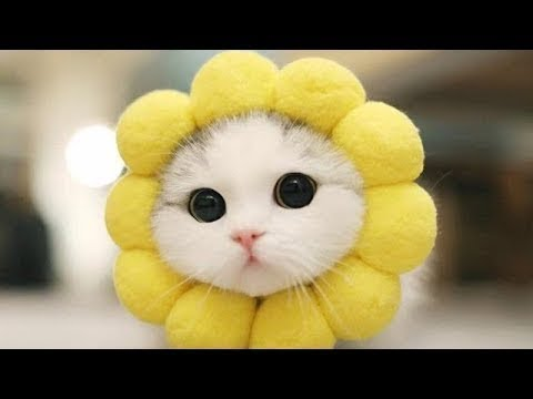 ♥Happy Cats Compilation - Cutest Cat Ever 2019 ♥