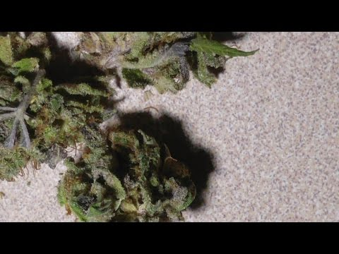 Strain Review:  Purple Sour Diesel!!