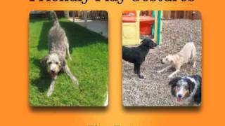 Zoom Room Guide To Dog Play Gestures