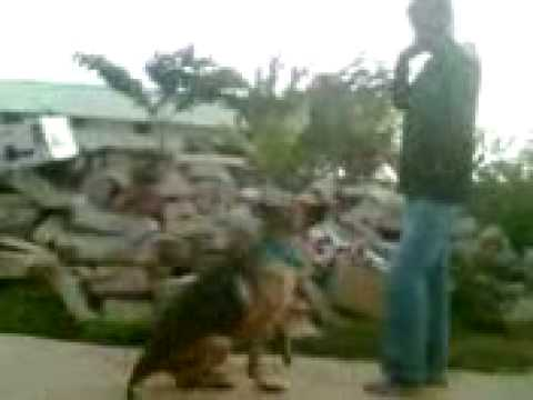 my self training my dog 4 (hemanth bangalore)