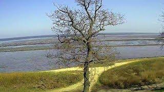 Sylt Live Webcam aus Keitum mit Blick auf das Wattenmeer