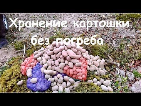 Как хранить картошку без погреба
