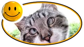 Смешное видео про животных  Подборка 2015(, 2015-09-25T00:18:51.000Z)