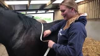 30 Day Horse Vlog Day 26 - Weight Tape Day!/Dylan Has Back Shoes/Schooling Doesn't Go To Plan