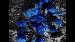 Bad Religion - 21st Century Digital Boy (Official Video with lyrics)