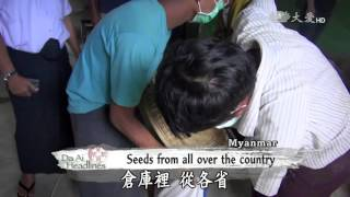 【Myanmar】 Free Rice Seeds For Farmers In Need