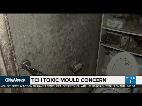 Woman returns from vacation to find toxic mould in TCHC unit